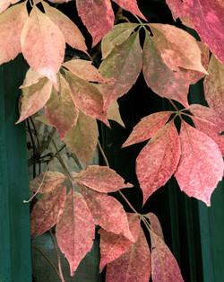 Modeled Leaves
