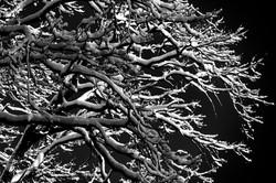 Oak Snow Branches (Matt) copy