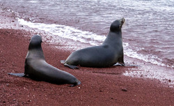 Two Seals by the water_edited.jpg