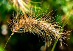Wisp of Grass