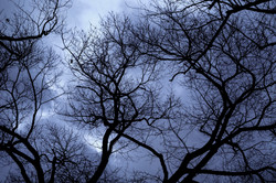 Branches(small)