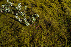 Laca, flowers, moss copy