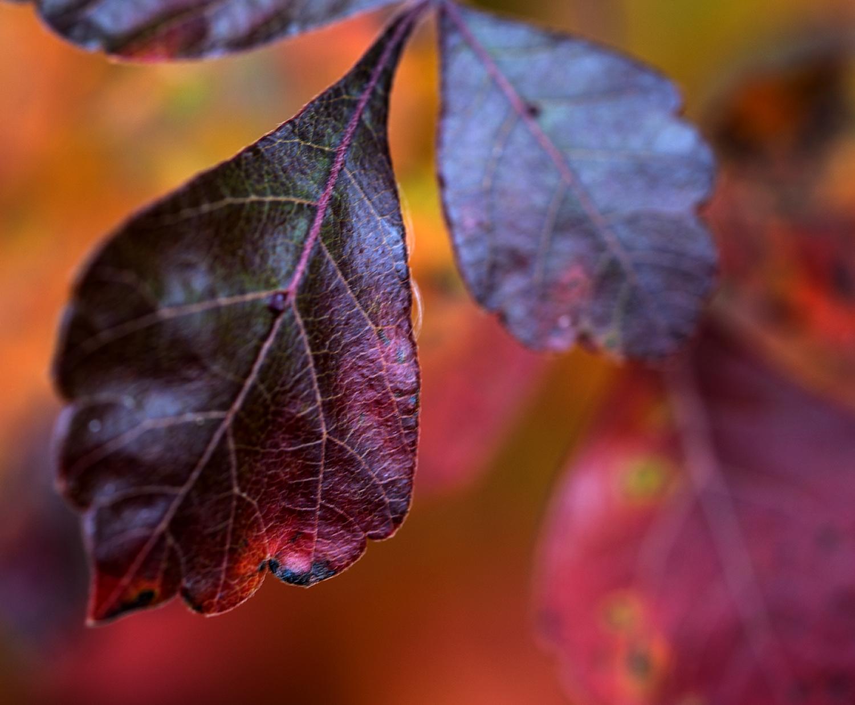Fall leaf(small) copy copy