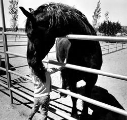 Nice Horse.