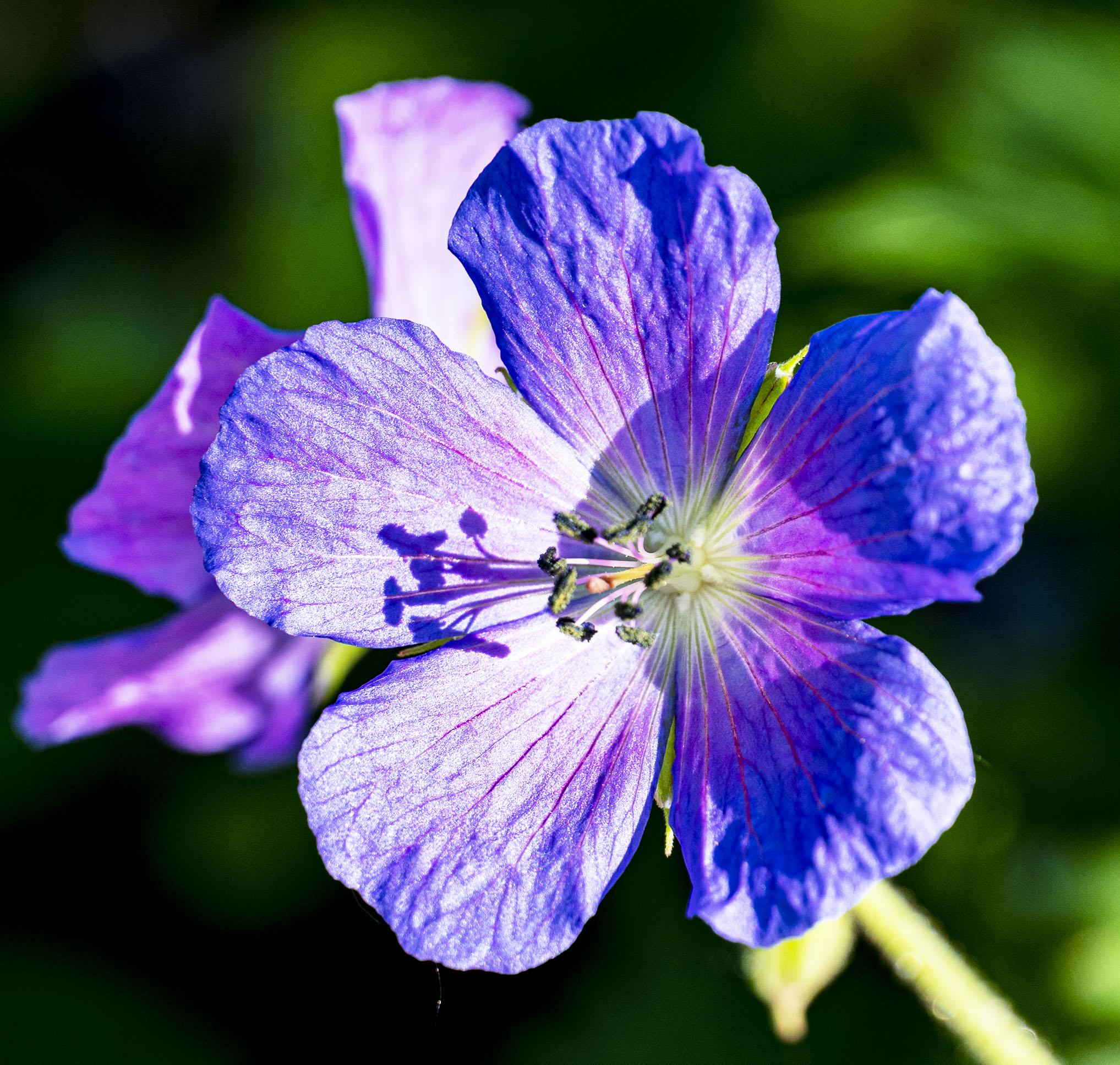 Little Blue Flower 1 copy