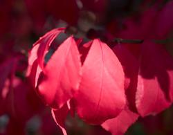 """leaf """"4""""X5"""")  copy"""
