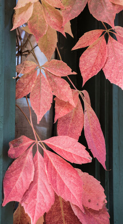 Leaves on house on Circle
