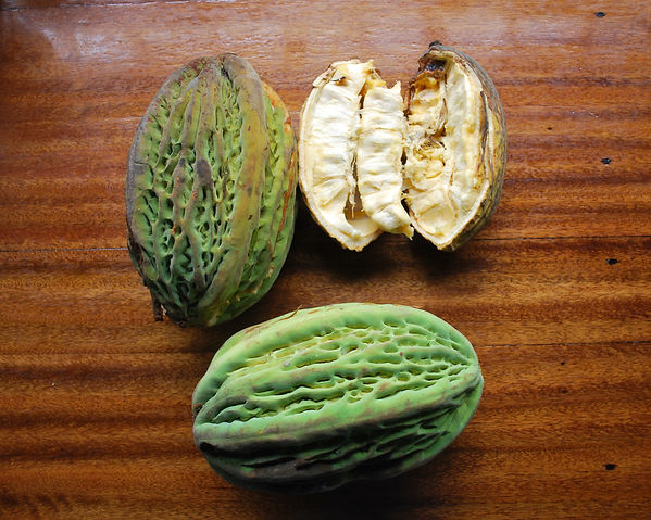cacao blanco fruit.jpg