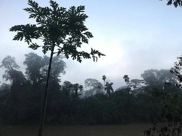 papaya Rio Curaray.jpg