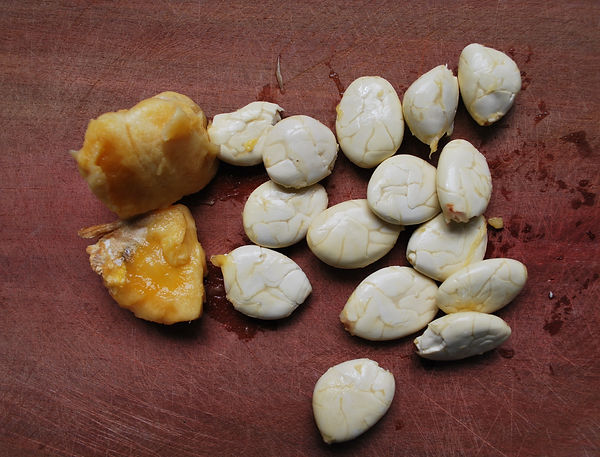 cacao blanco seeds 2.jpg
