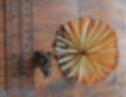 red mushroom 3.jpg
