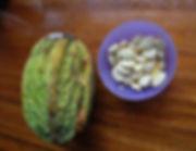 cacao blanco 5.jpg