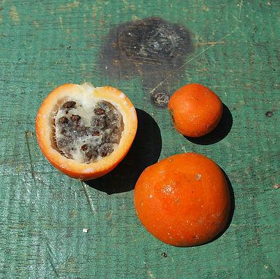 wild papaya 1000 (1).jpg
