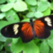 850_Butterfly_11_Photo_Swanson.jpg