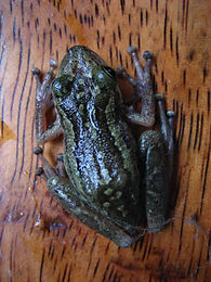Frog_9.jpg