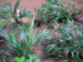 plants1 2.jpg