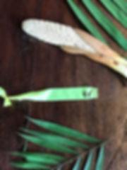 414 Arecaceae Phytelephas tenuicaulis_ed