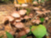 Fungi_12_Photo_Jordan_Hoffman.jpg