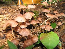 Fungi_12_Photo_Jordan_Hoffman.jpg