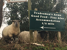 Trade Winds (2) pub sign with sheep.jpg