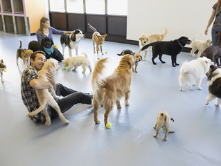 Know your dog's natural pack position