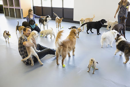 The Dog Spot | Training & Enrichment Center | Daycare | Training | Boarding