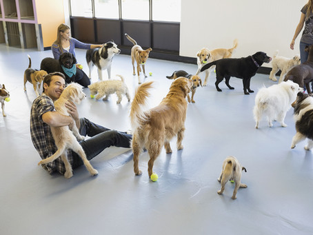Doggie Daycares and Dog Parks