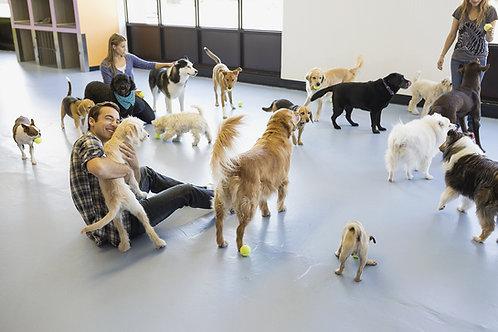 additional dog