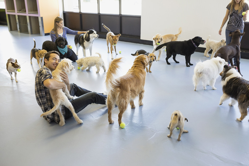 Rover Loves Doggy Daycare!  Or Does He????