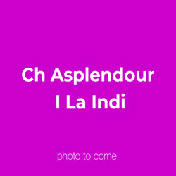 Ch Asplendour I La Indi