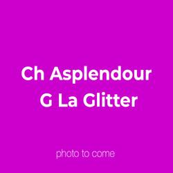 Ch Asplendour G La Glitter