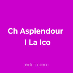 Ch Asplendour  I La Ico