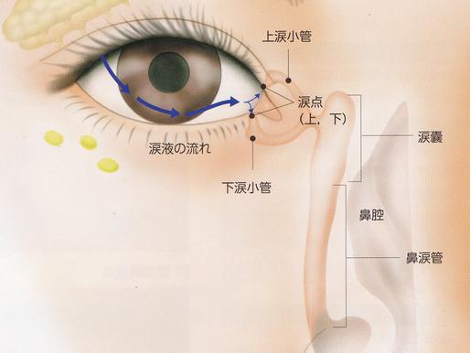 目薬と鼻の関係