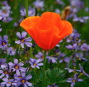 flowers_3914A.jpg