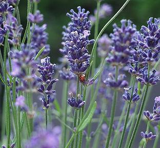 flower-3372511_960_720.jpg