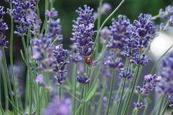 flower-3372511_960_720