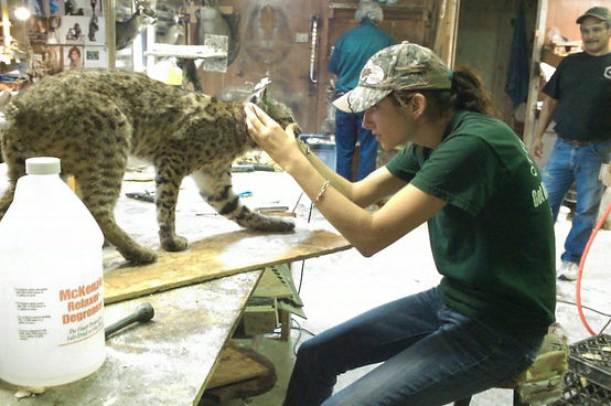 custom taxidermy work, deer processing, meat processing, deer taxidermy, hunting trophies, hunting trips, san antonio taxidermy, deer and exotic taxidermy work, taxidermy snd antonio, ottea taxidermy