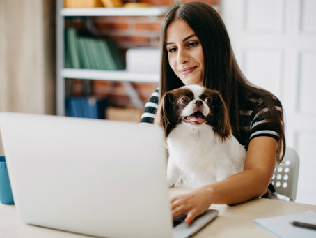 Pets and a Pandemic: What to Know While We Work from Home