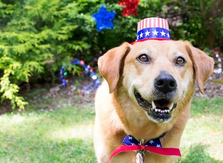 Summertime Pet Safety Tips