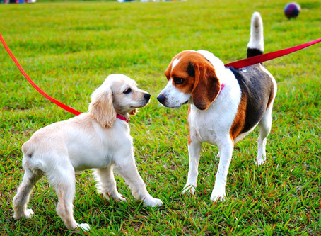 Family Matters: How to Introduce a New Dog to Your Current Dog