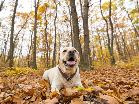 The Best Dog- Friendly Fall Activities in Chicago