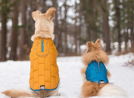 Winter Guide for Pet Owners
