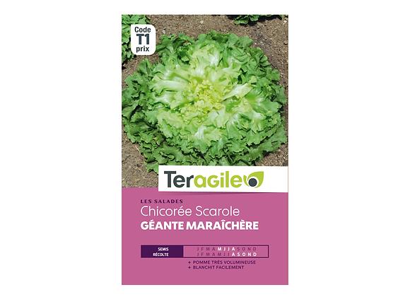 GRAINES CHICORÉE SCAROLE GÉANTE MARAÎCHÈRE 4G TERAGILE®