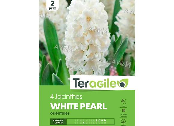BULBES DE JACINTHES 'WHITE PEARL' ORIENTALES - TERAGILE® - X4