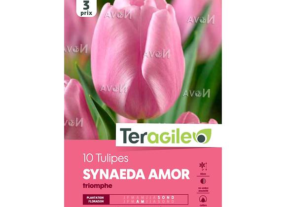 BULBES DE TULIPES 'SYNAEDA AMOR' TRIOMPHE - TERAGILE® - X10