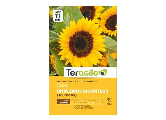 GRAINES SOLEIL TOURNESOL UNIFLORUS GIGANTEUS 4G TERAGILE®