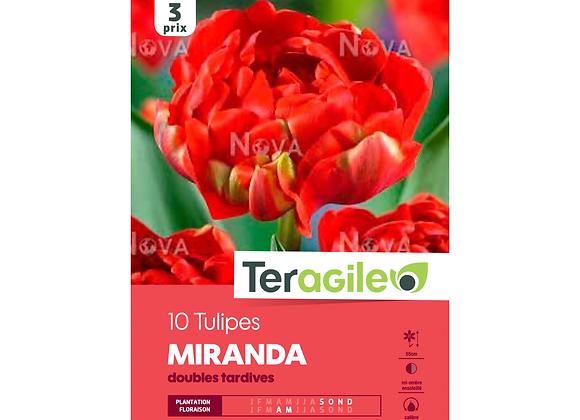 BULBES DE TULIPES 'MIRANDA' DOUBLES TARDIVES - TERAGILE® - X10