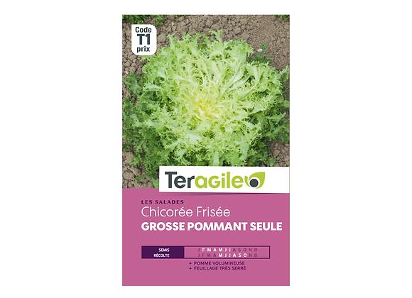 GRAINES CHICORÉE FRISÉE GROSSE POMMANT SEULE 4G TERAGILE®