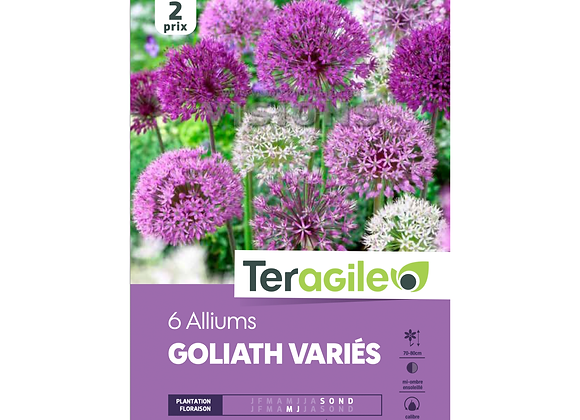 BULBES D'ALLIUMS 'GOLIATH' VARIÉS- TERAGILE® - X6