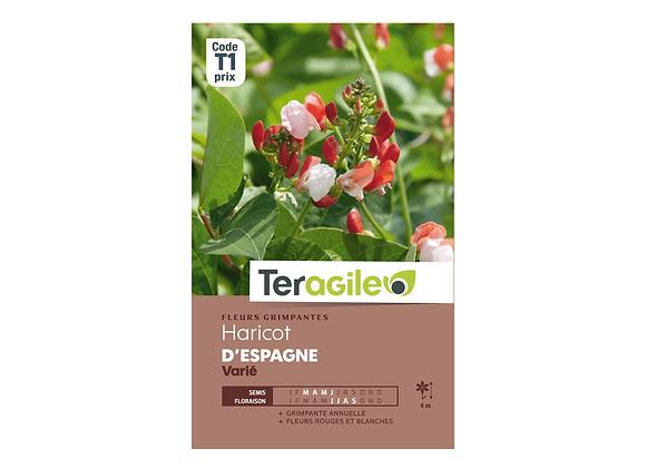GRAINES HARICOT D'ESPAGNE VARIÉ 10G TERAGILE®